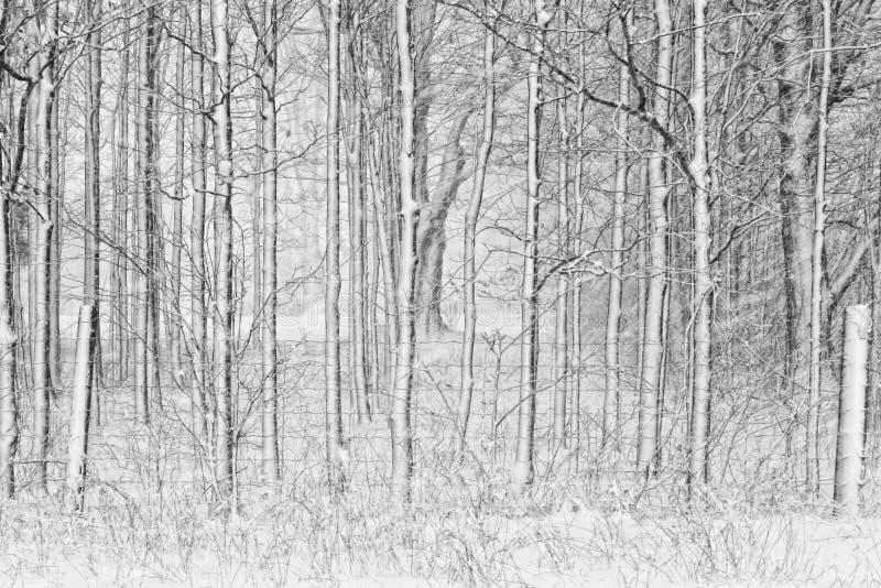 Sneeuw Behandelde Bomen met Omheining stock afbeelding