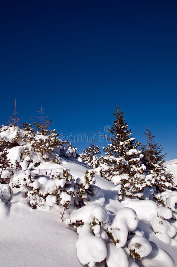 Sneeuw behandelde bomen op berg royalty-vrije stock foto