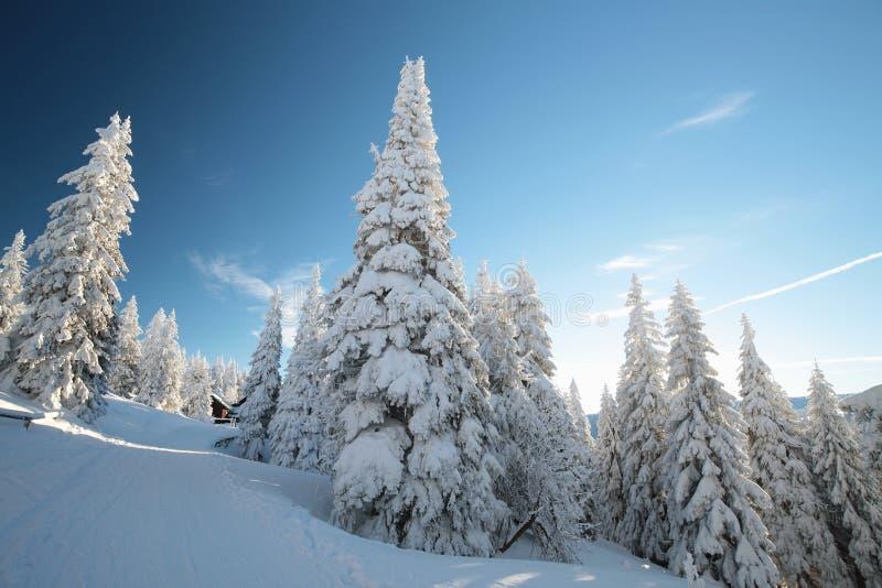 Sneeuw behandelde bomen op de berghelling royalty-vrije stock foto