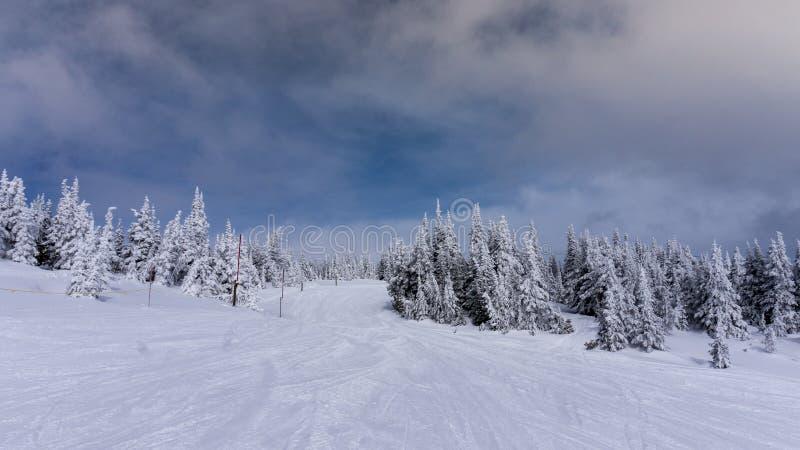 Sneeuw Behandelde Bomen op Ski Slopes van Zonpieken royalty-vrije stock afbeelding
