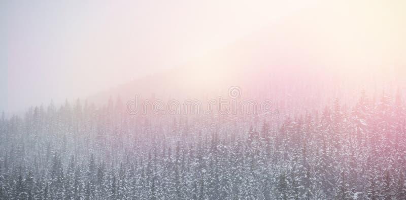 Sneeuw behandelde bomen tijdens de winter stock illustratie