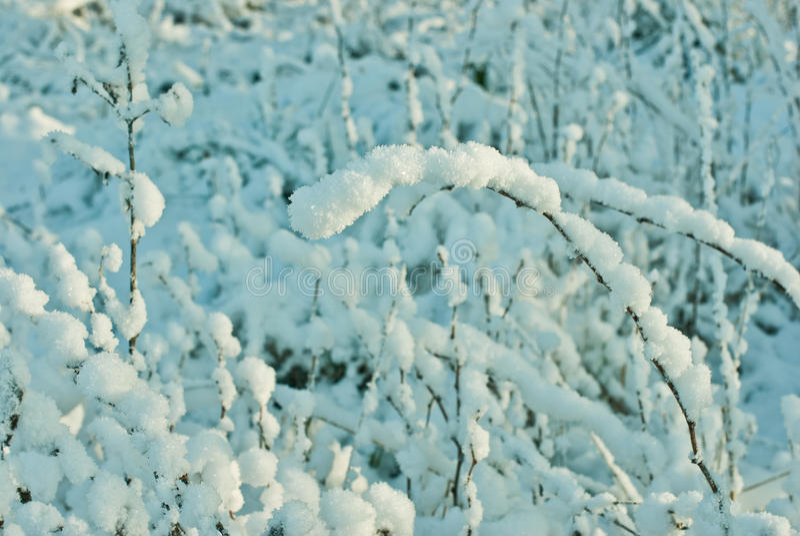 Sneeuw behandelde installaties in de winter royalty-vrije stock foto