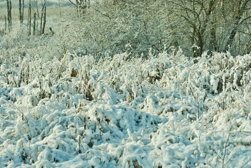 Sneeuw behandelde installaties in de winter royalty-vrije stock foto's