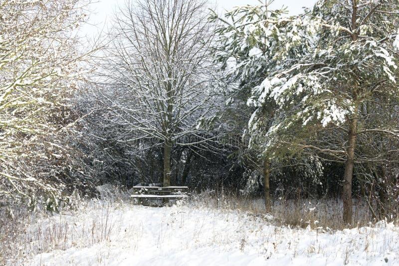 Sneeuw behandelde parkbank alleen onder bomen stock foto