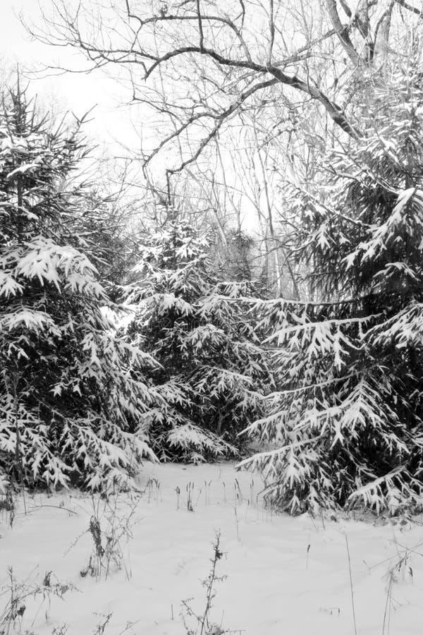 Download Sneeuw Behandelde Pijnboombomen Stock Foto - Afbeelding bestaande uit nave, grond: 107706828