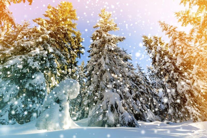 Sneeuw behandelde pijnboombomen en dalende sneeuw in bergbos in s royalty-vrije stock fotografie