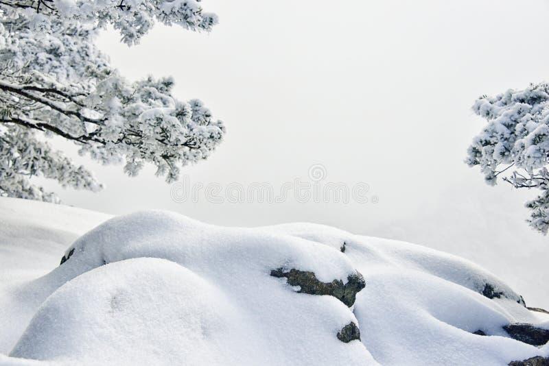 Sneeuw behandelde pijnboomboom en steen stock afbeeldingen