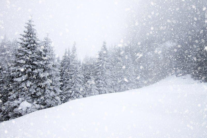 sneeuw behandelde sparren in zware sneeuwval - Kerstmisachtergrond royalty-vrije stock foto's