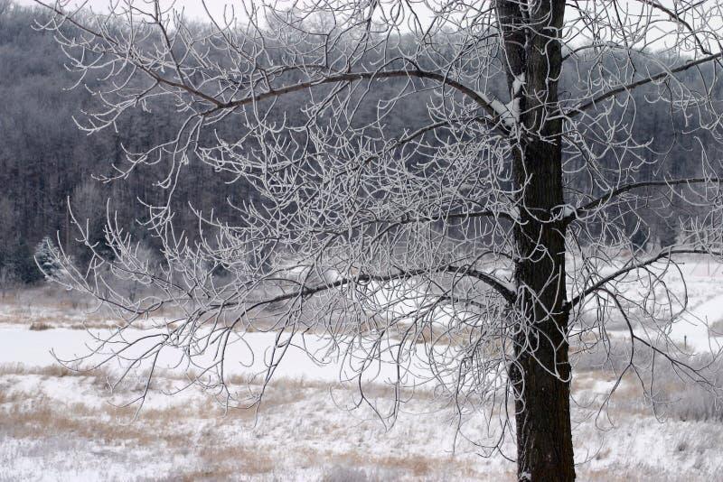 Sneeuw Behandelde Takken stock afbeeldingen