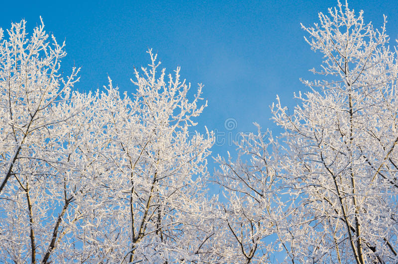 Sneeuw behandelde takken stock afbeelding