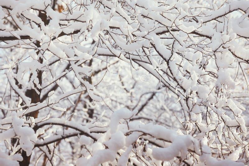 Sneeuw behandelde takken, unieke aardachtergrond royalty-vrije stock fotografie