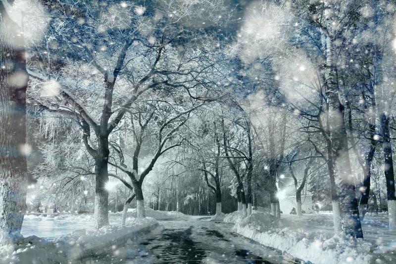 Sneeuw in bevroren houtkerstmis stock afbeeldingen