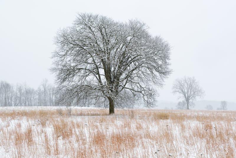 Sneeuw Bijeengekomen Weide stock afbeelding