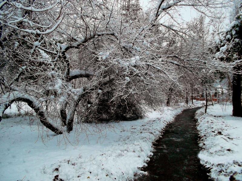 sneeuw boom stock afbeelding