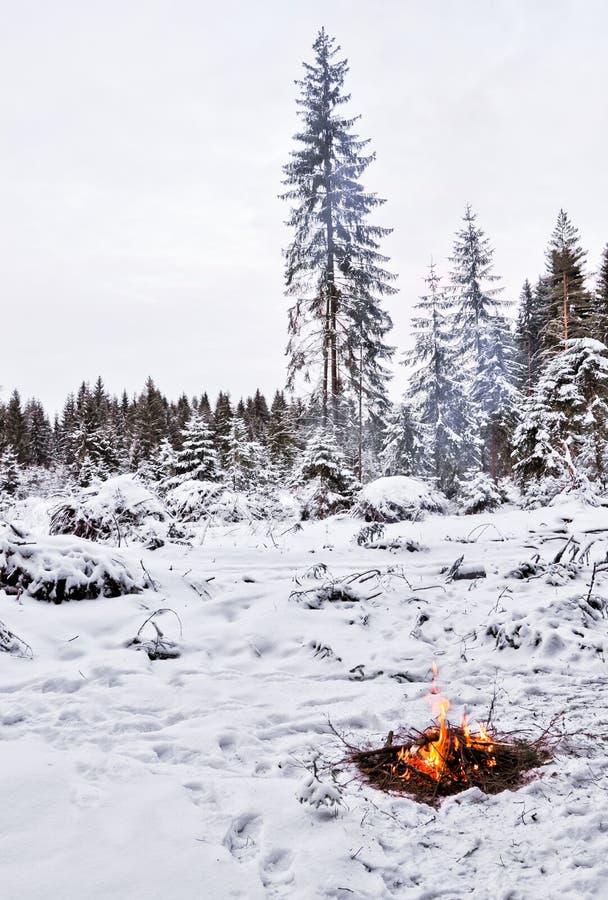 Sneeuw, bos en brand stock afbeeldingen