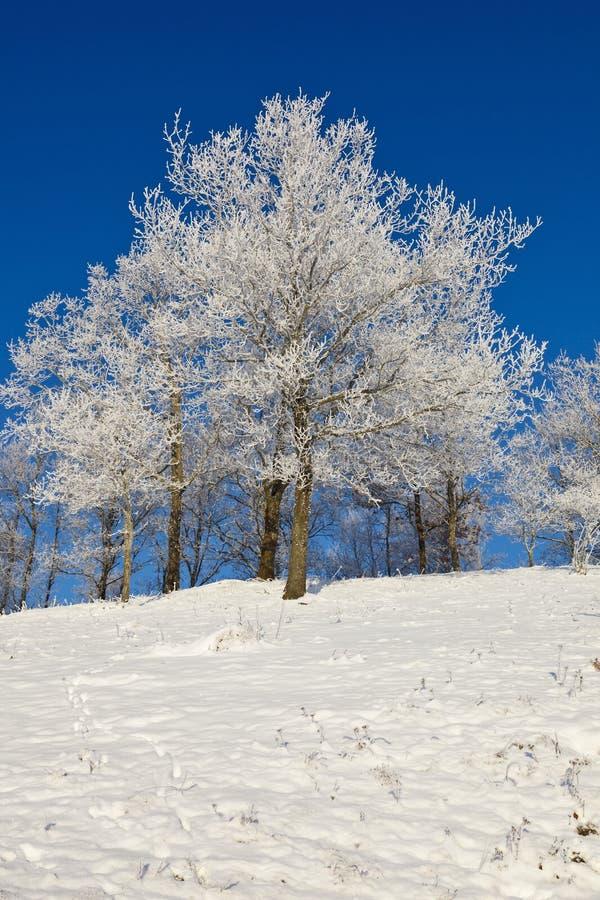 Sneeuw bos met loofbomen royalty-vrije stock foto's