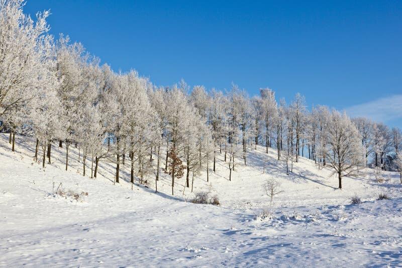 Sneeuw bos met loofbomen stock fotografie