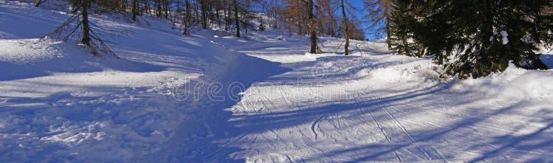 Sneeuw bossleeppanorama stock foto
