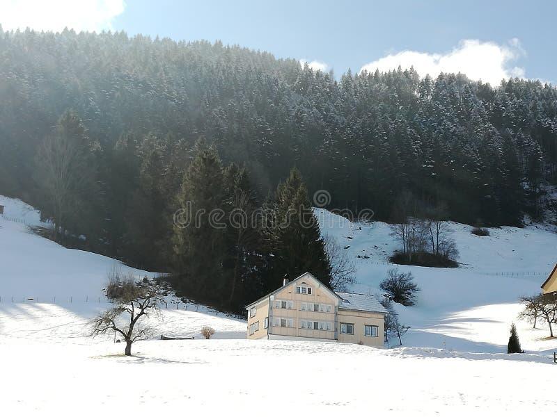 Sneeuw bovenop treetops de berghuis van Zwitserland stock foto's