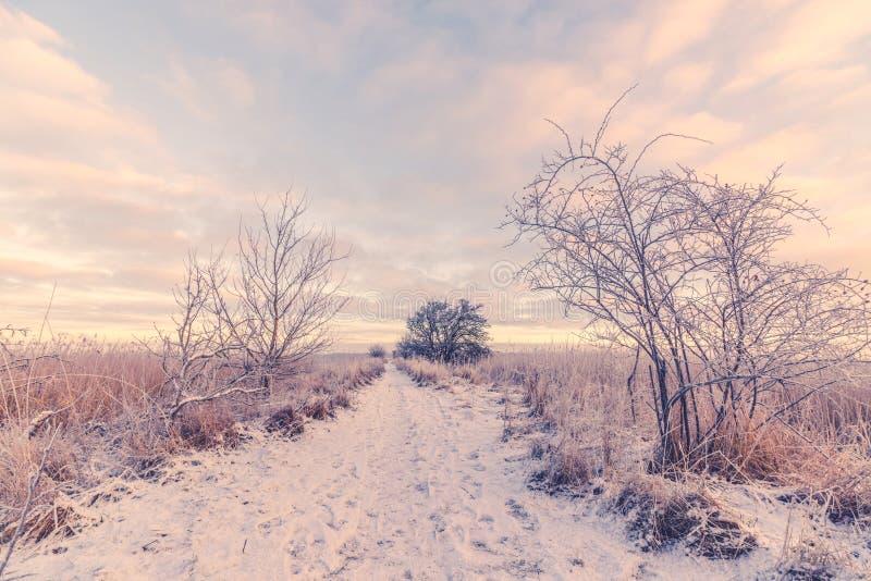 Sneeuw de winterlandschap met een weg stock fotografie
