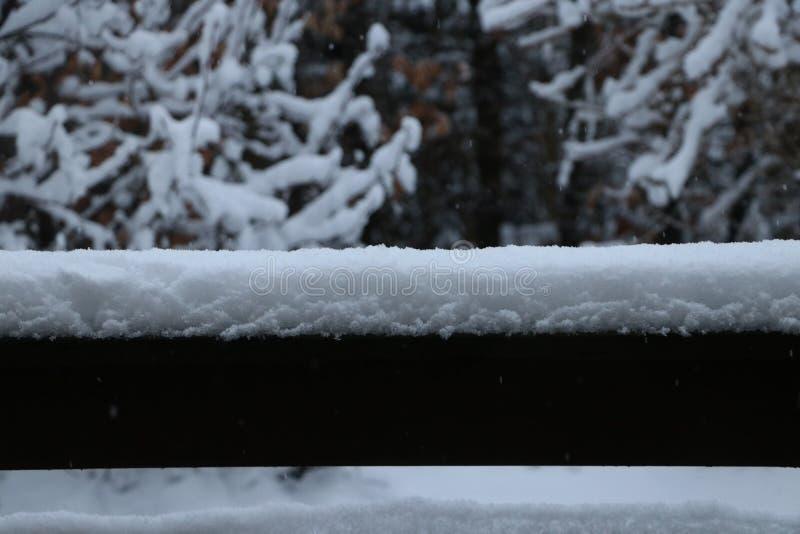 Sneeuw die op takken van een boom leggen royalty-vrije stock afbeelding