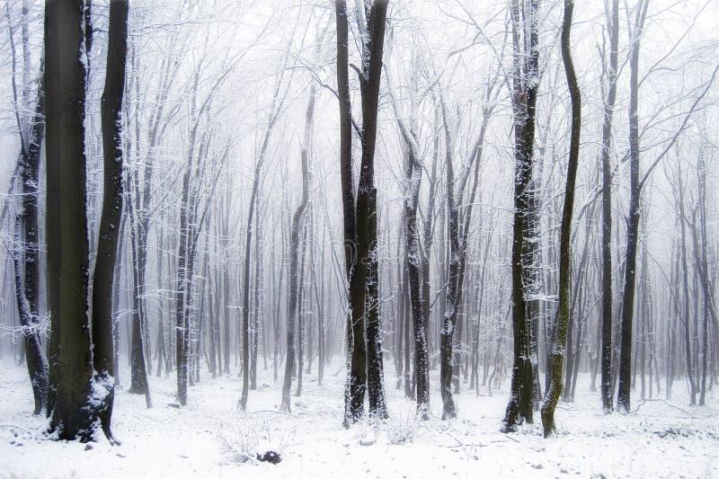 Sneeuw in een mooi bos met mist stock afbeeldingen