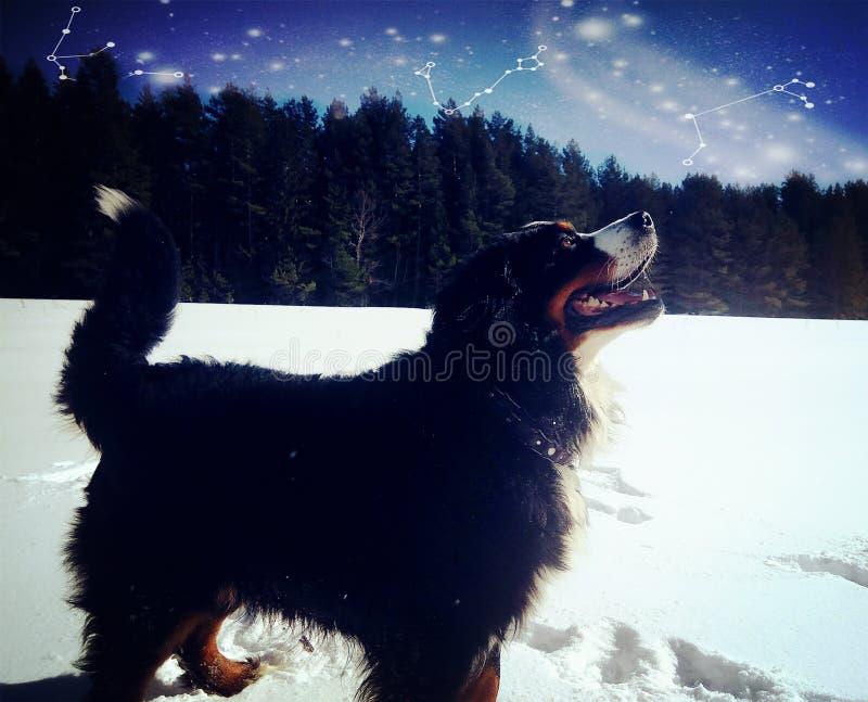 Sneeuw en hond stock afbeelding