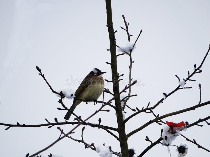 Sneeuw en vogel stock afbeeldingen
