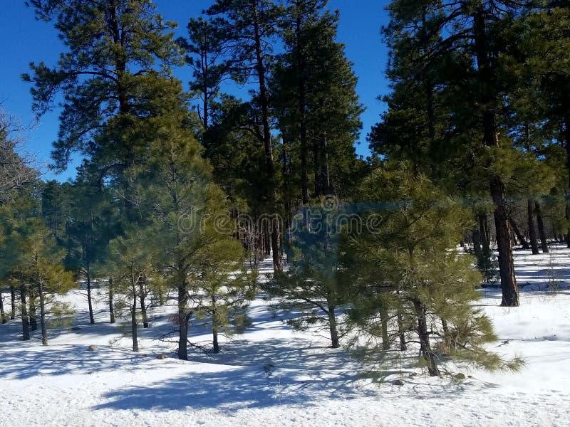Sneeuw groene installatie stock foto