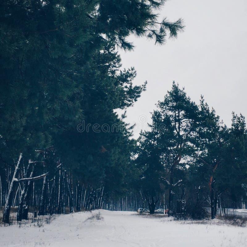 Sneeuw in het bos in de winter stock afbeelding