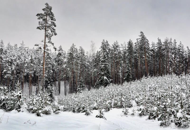 Sneeuw hout stock fotografie