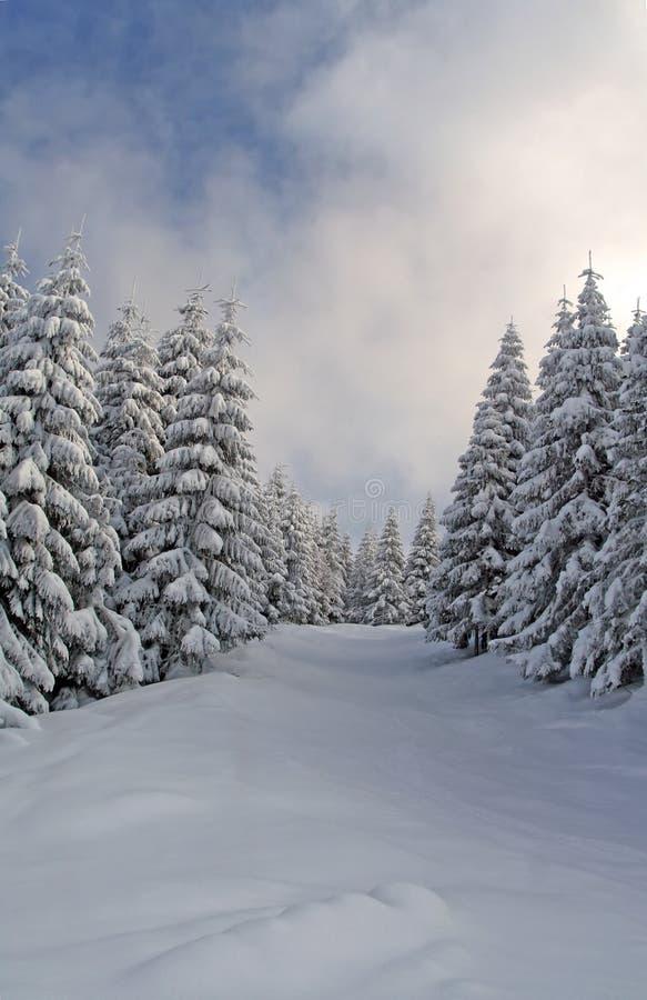 Sneeuw Hout stock afbeeldingen