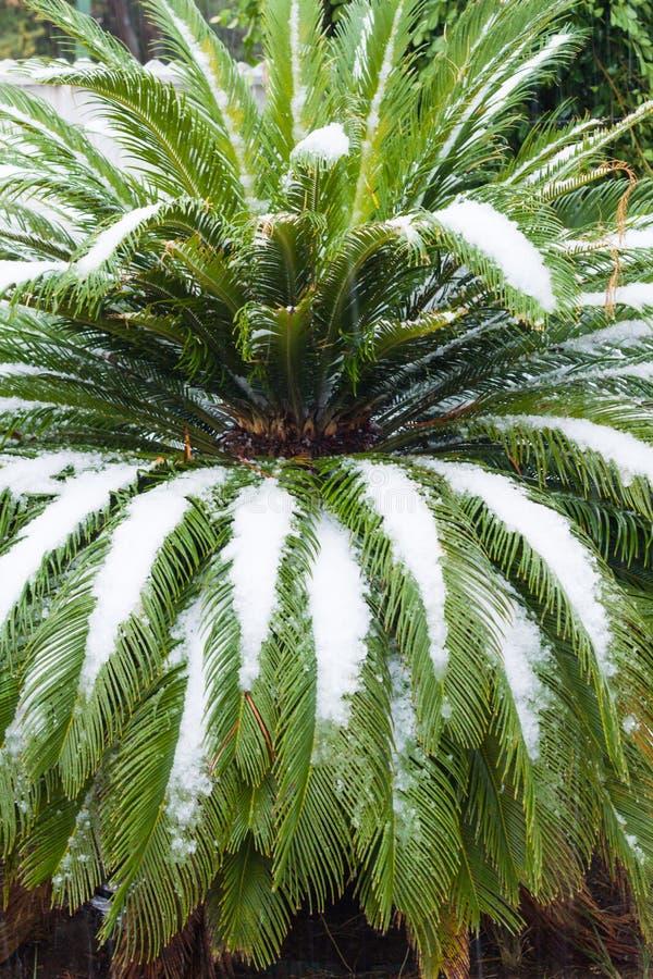 Sneeuw in Israël. 2013. royalty-vrije stock foto's