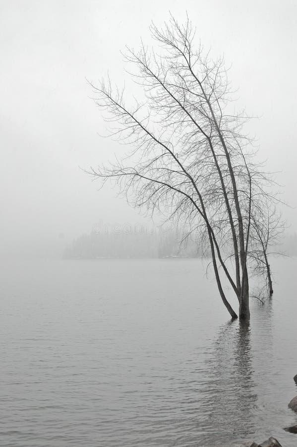 Sneeuw lakeshore royalty-vrije stock afbeeldingen