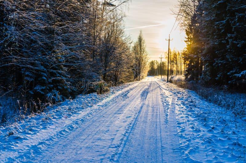 Sneeuw landelijke weg door een winters pijnboombos bij zonsondergang stock afbeelding