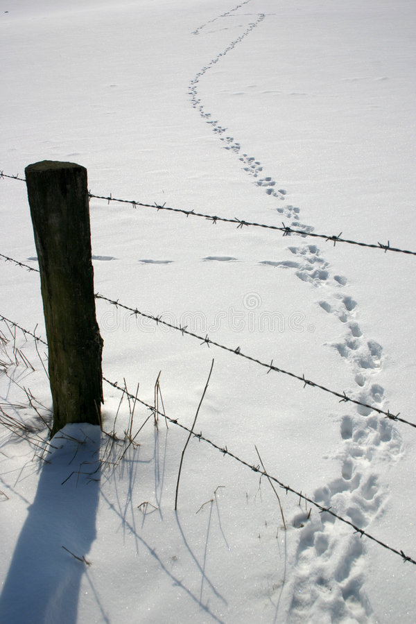 Sneeuw met sporen royalty-vrije stock foto's