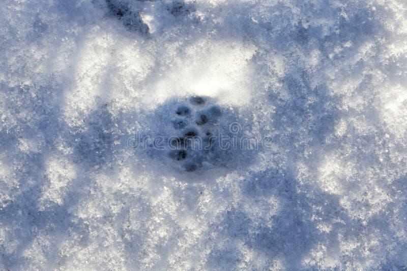 Sneeuw na sneeuwval royalty-vrije stock afbeelding