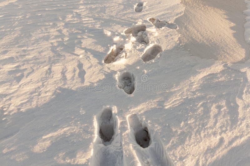 Sneeuw na sneeuwval stock foto's