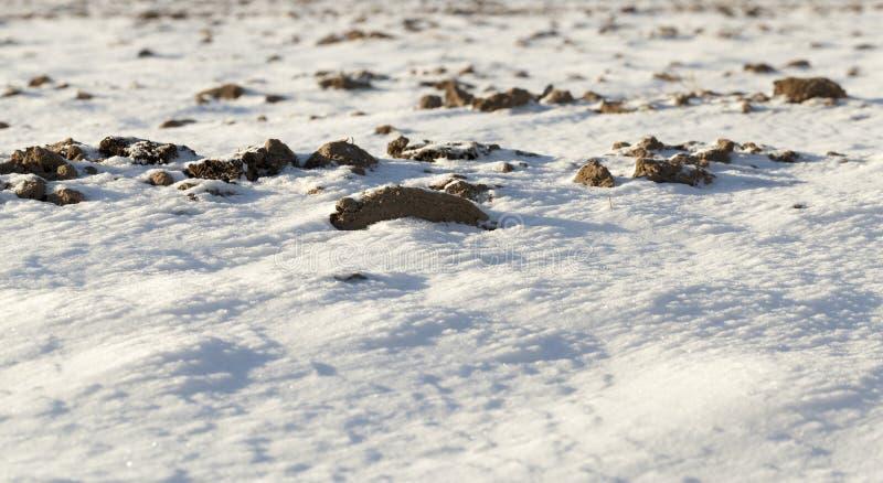 Sneeuw na sneeuwval stock foto