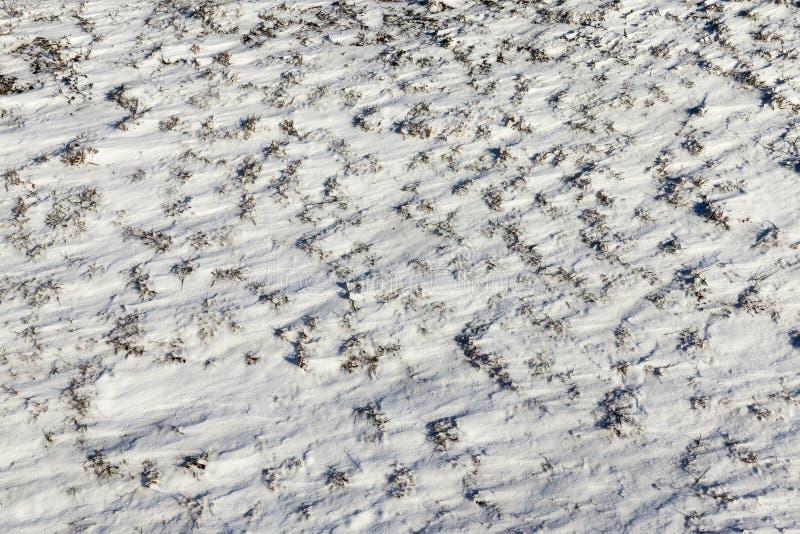Sneeuw na sneeuwval stock fotografie