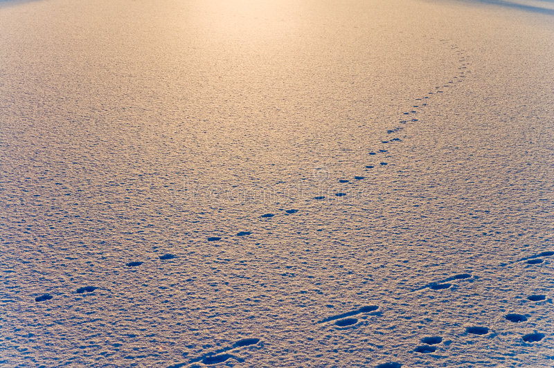 Sneeuw op avond stock afbeeldingen
