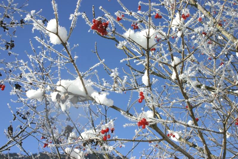Sneeuw op boom royalty-vrije stock afbeelding