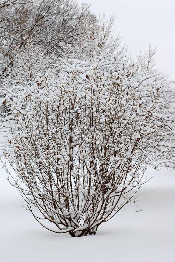 sneeuw op boom stock fotografie