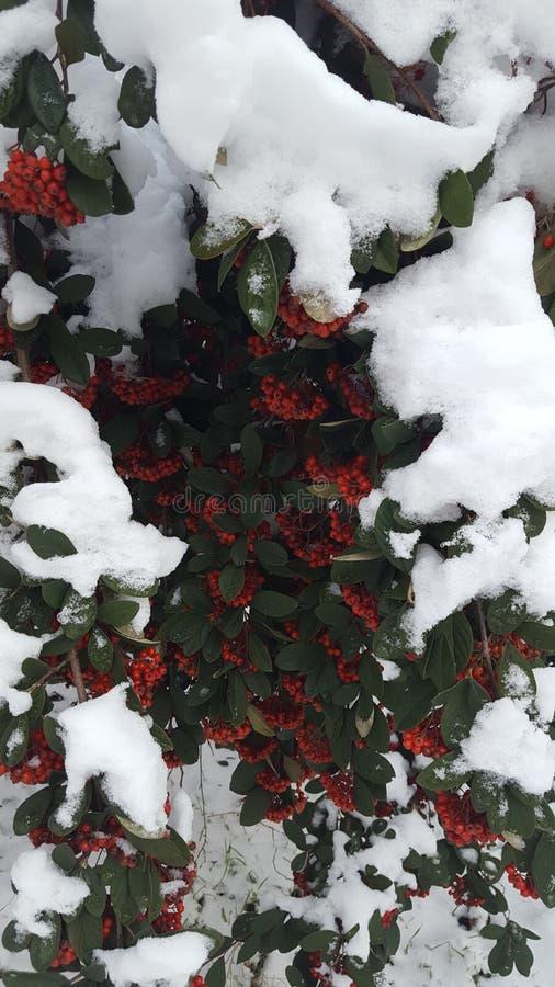 Sneeuw op Boom stock foto's