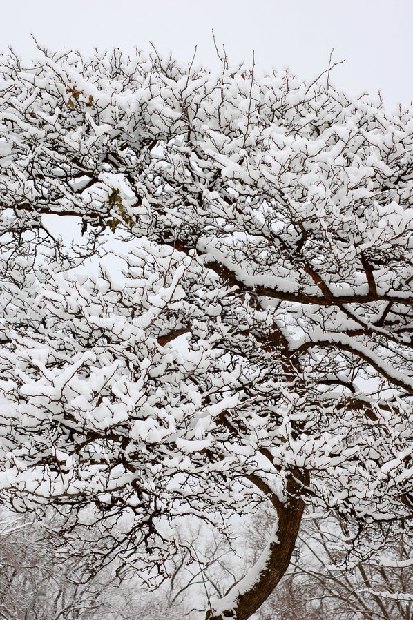 sneeuw op boom in de Winter stock afbeeldingen