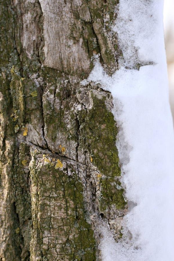 Sneeuw op boomstam royalty-vrije stock afbeelding