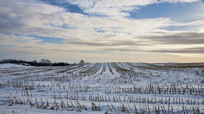 Sneeuw op de Gebieden royalty-vrije stock afbeelding