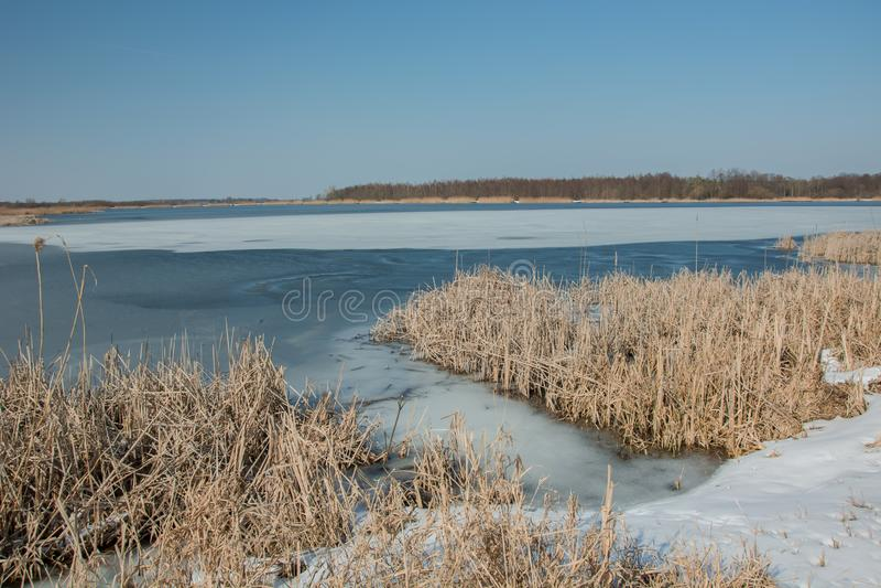 Sneeuw op de kust van een bevroren meer en een droog riet Horizon en blauwe hemel stock foto