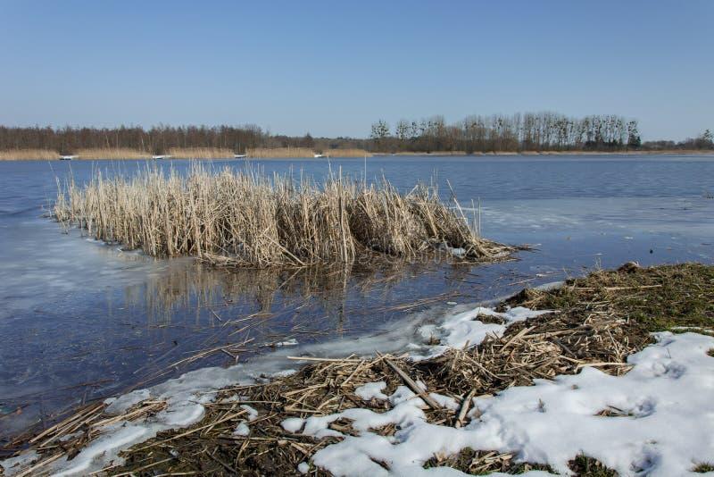 Sneeuw op de kust van het meer en een massa van riet Horizon en blauwe hemel royalty-vrije stock fotografie
