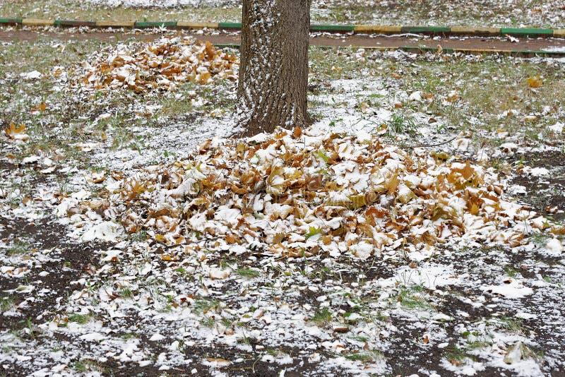 Sneeuw op de stapel van bladeren stock afbeelding